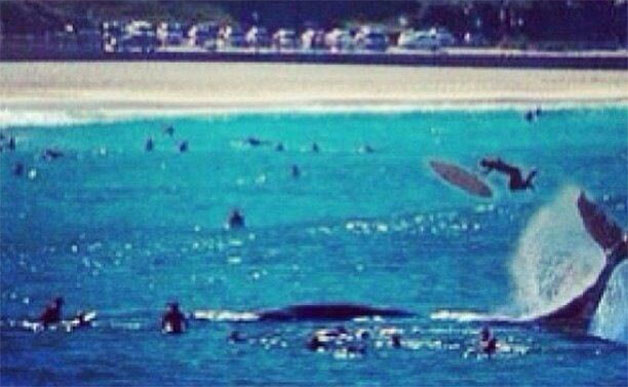 bondi-beach-whale-twitter-flipped-628